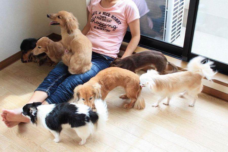 前田家の家族の一員となって過ごす、ハートフルな民泊ペットホテル