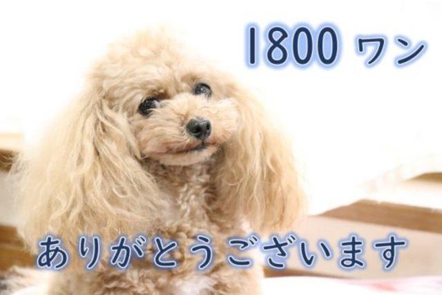 お預かり累計1800ワン