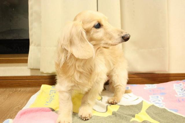 シニア犬も安心していただけるペットホテルです