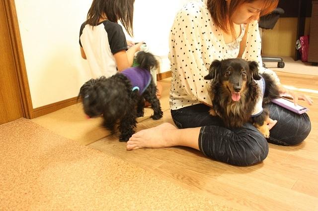ペットホテル 大阪市平野区からお越しです。無料送迎します