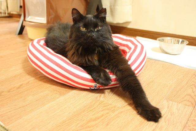 大阪市平野区でペットホテルをお探しの方はヘルシーワンサポートにお任せ下さい