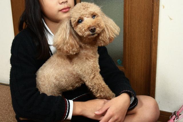 前田家全員でワンちゃんのお世話をするのがヘルシーワンサポートのスタイルです