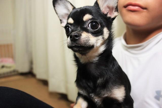 ベテランスタッフが赤ちゃん犬を24時間お世話します。