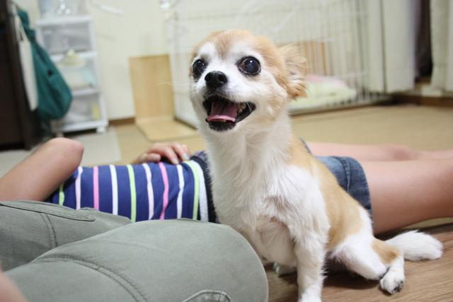 大阪市平野区で大人気のペットホテルです。