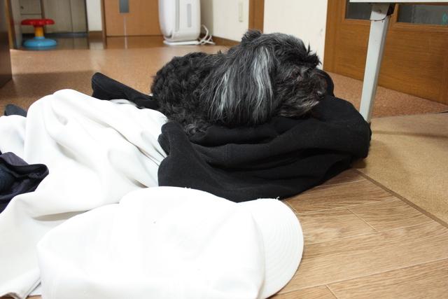 洗濯物の上で寝てるわ ええよ好きな所で寝て