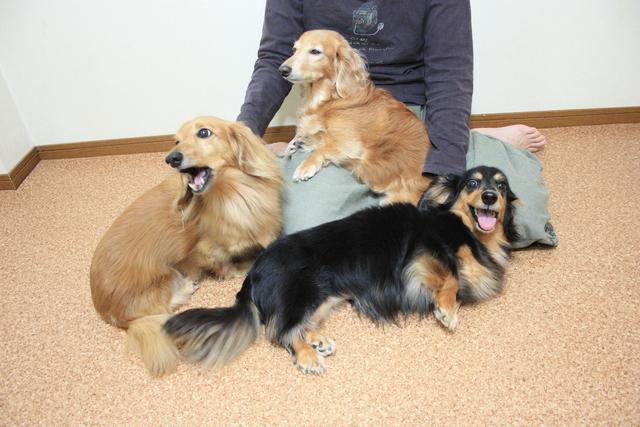多頭飼い割引きがある大阪市平野区のペットホテルです