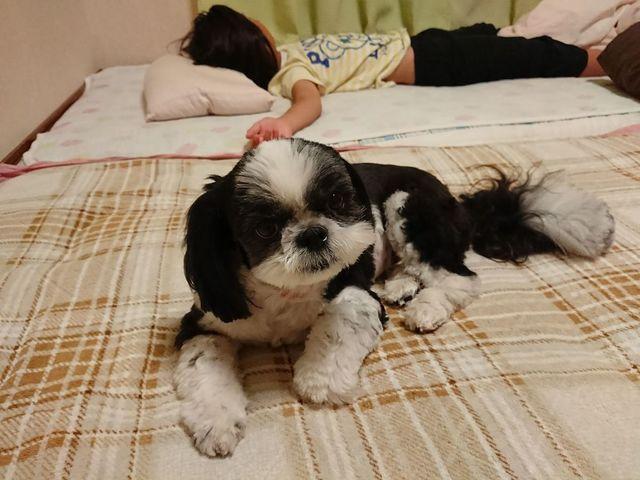 ペットホテルですが、寝室で一緒に寝ることもあります。