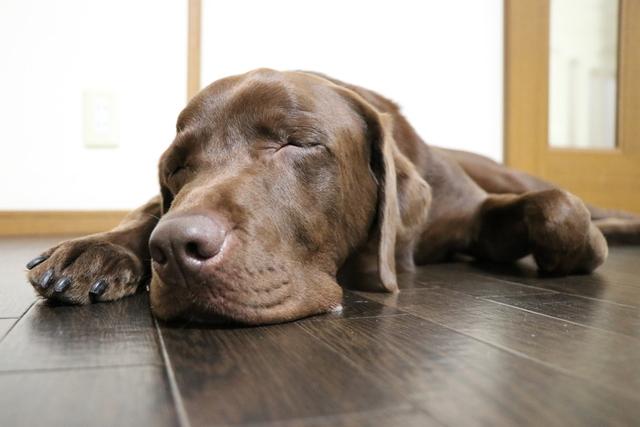 大型犬のお預かりは基本1階ですが2階の時もあります