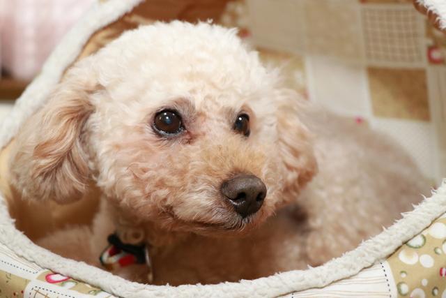シニア犬のお預かりも経験豊富のヘルシーワンサポートにお任せください