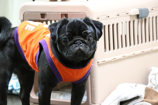 幼犬は、少しのお買い物でも目が離せない!そんな時はお預かりします