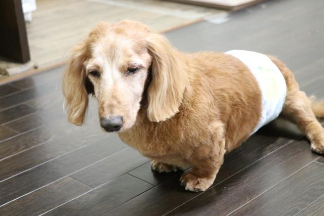 シニア犬のお預かりも多いペットホテルです