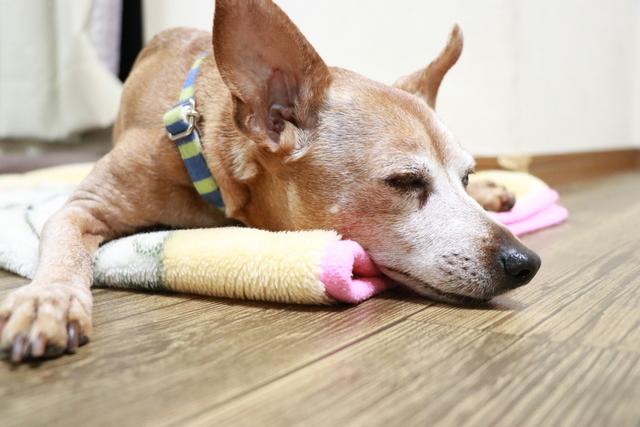 大阪府大阪市城東区でホームステイ型ペットホテルをお探しの方は当ホテルに!