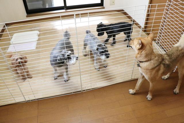 貸し切りルームで親戚3家族のお預かりです。