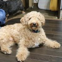 シニア犬のお預かりも多いペットホテルですのサムネイル