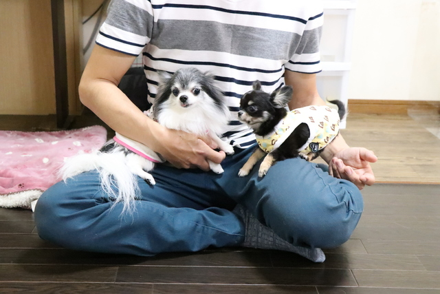 24時間スタッフ常駐のペットホテルなので幼犬も安心できます