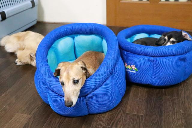 シニア犬は14年の実績ある当ペットホテルにお越しください