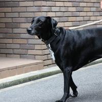 大型犬のお預かりは基本1階のお部屋ですのサムネイル