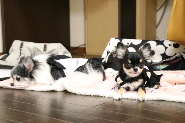 大阪市天王寺区周辺でフリースペース型ペットホテルです