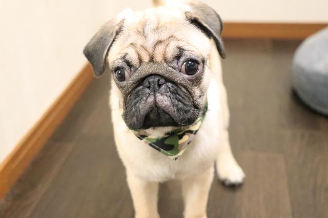 幼犬でもワクチン接種済でしたらお預かりできるペットホテルです