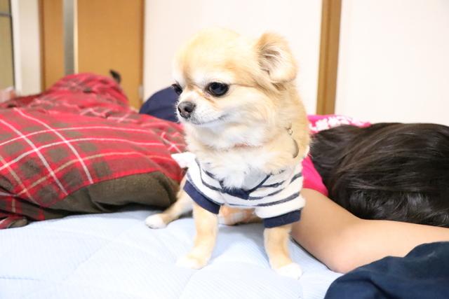 お布団で一緒に寝る子は一緒にペットホテルです