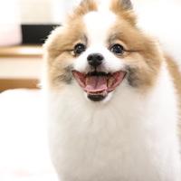 ワンちゃんから学ぶことがあります!それは笑顔!のサムネイル