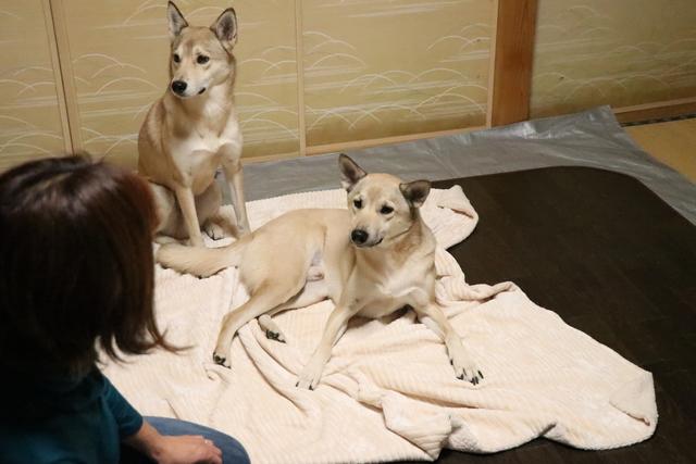 保護犬等の怖がりな子は個室もご用意します