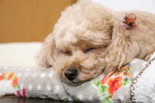 のんびりしたい犬はヘルシーワンサポートにお越しください