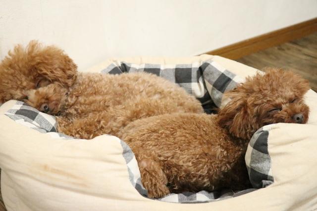 熟睡できるペットホテルが一番!