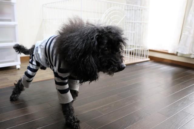 ヘルニアの犬も大丈夫なバリアフリーペットホテルです