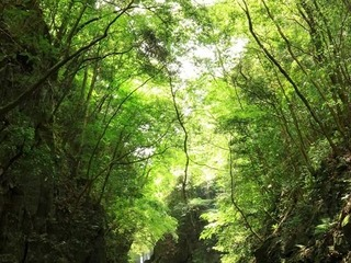 大阪府河内長野市の光滝に行って来ました
