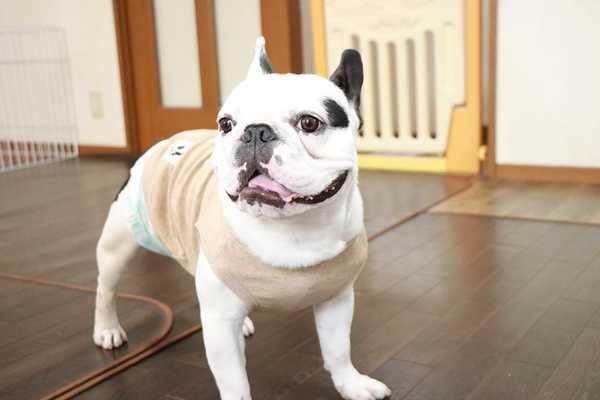 中型犬は一日一匹限定でお預かりしているペットホテルです