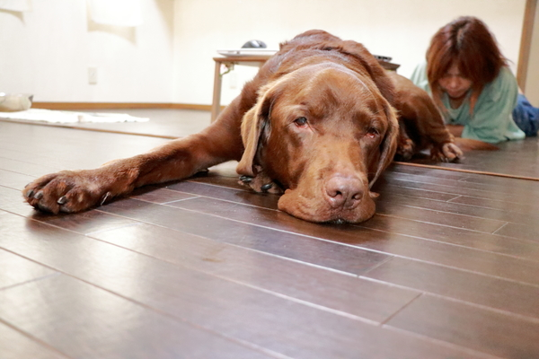 大型犬は予約が取れない日が多いですがお問い合わせください