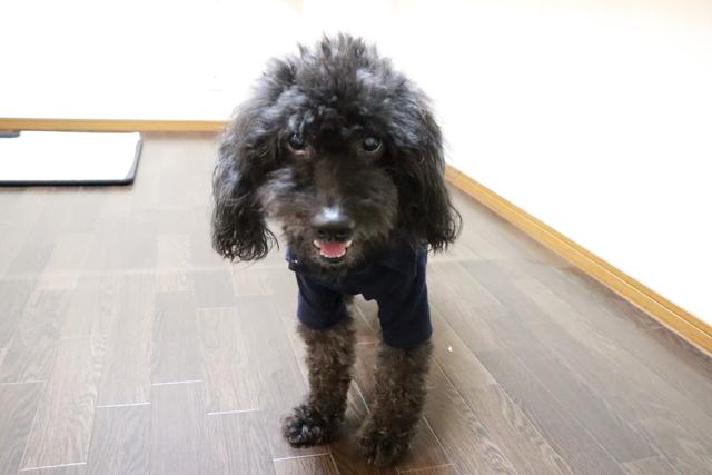 シニア犬でヘルニアの犬ちゃんも安心してお任せください