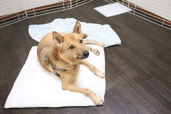 奈良県生駒市の保護犬君