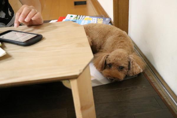 妻は書類整理をしながら犬ちゃんも、ちゃんと見ていますよ