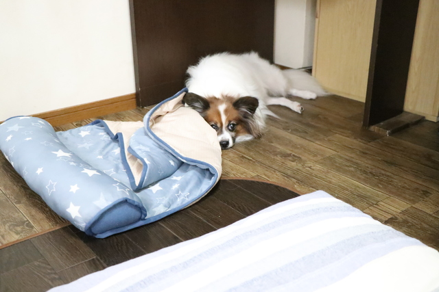 普段使っているベッドを使わなくても一応持って来てください。