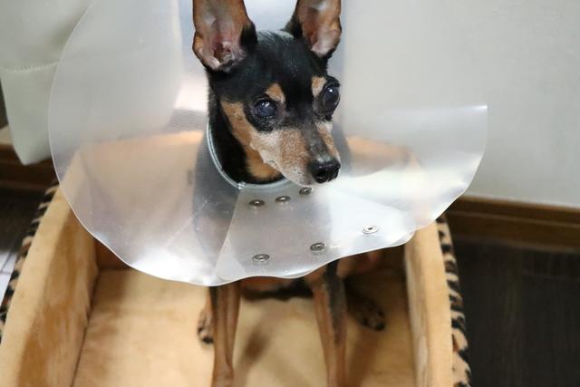 バリアフリーなので白内障の犬ちゃんも安心
