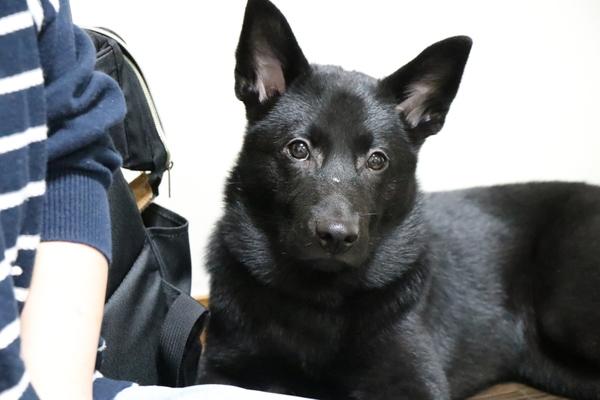 保護犬ちゃんは必ず見学にお越しください
