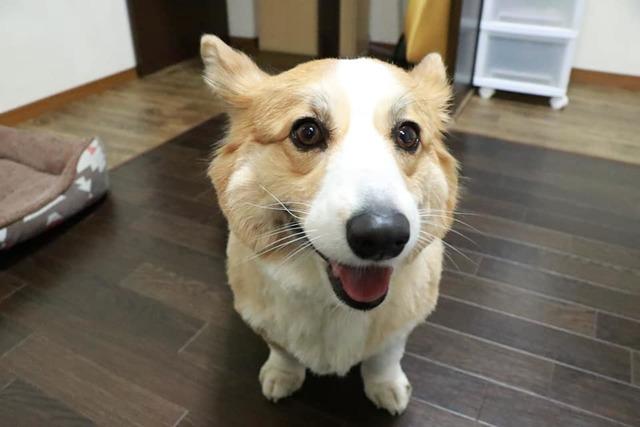 小型犬が多い日は中型犬はお預かりできないこともあります