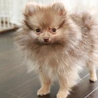 大阪に来られた際は当ペットホテルにお越しくださいのサムネイル