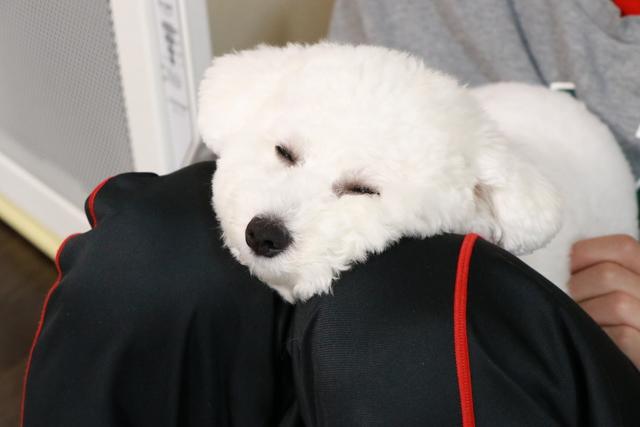 自宅でお預かりするペットホテルなので、次男の膝の上で寝ています。