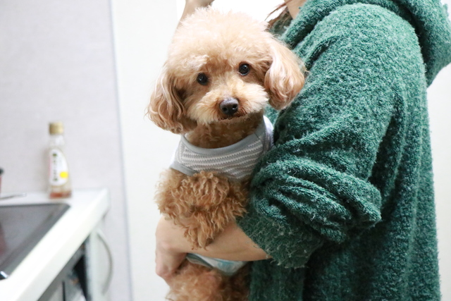 分離不安の犬ちゃん24時間スタッフ常駐ペットホテルだから大丈夫です。