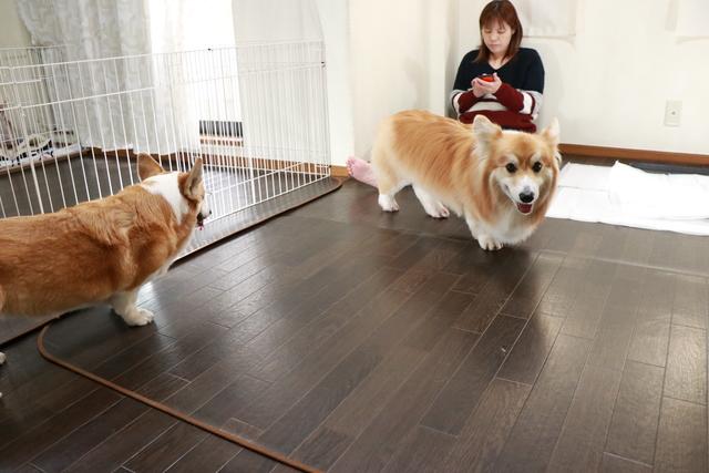 リビング内で中型犬と小型犬を分けてお預かりします