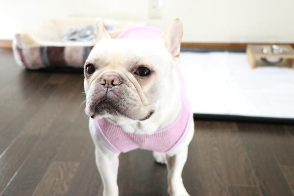 中型犬も日帰り3000円です