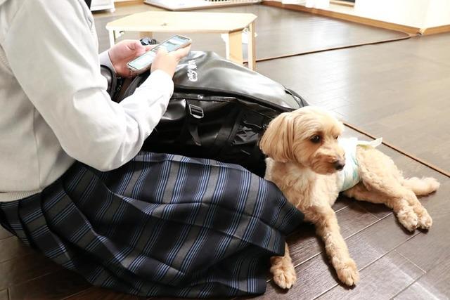 分離不安な犬ちゃんも寂しくないペットホテルです