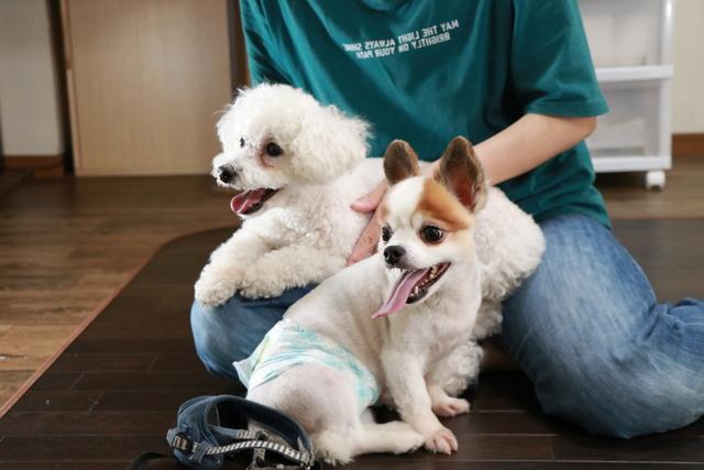 大阪市北区からペットホテル見学にお越し頂きました保護犬君