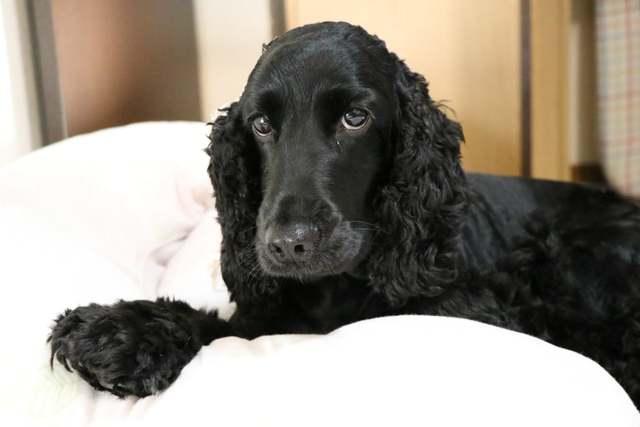 中型犬以上の犬種はリビングが狭いので1匹限定のお預かりです